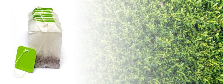 Zelený čaj zrychluje metabolismus